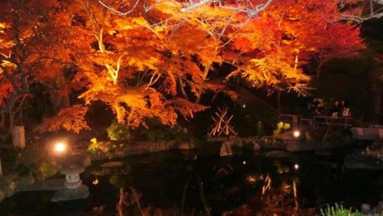 写真映えする紅葉スポットを1日で満喫♡秋の鎌倉女子旅プランのご提案