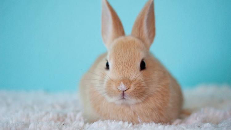 【豆知識クイズ】ウサギが食べる意外すぎる「アレ」とは?