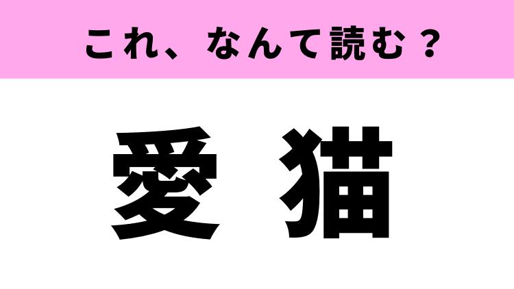 「愛猫」はなんて読む?猫を飼っている人必見の漢字!
